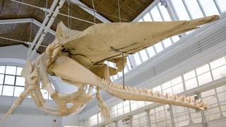 Spannende Ausstellungen im Zoologischen Museum